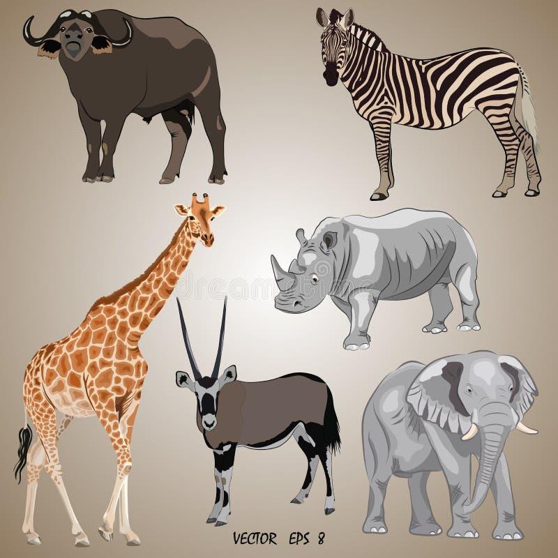 Un insieme degli animali africani popolari realistici - orice, giraffa, elefante, zebra, rinoceronte, bufalo illustrazione vettoriale