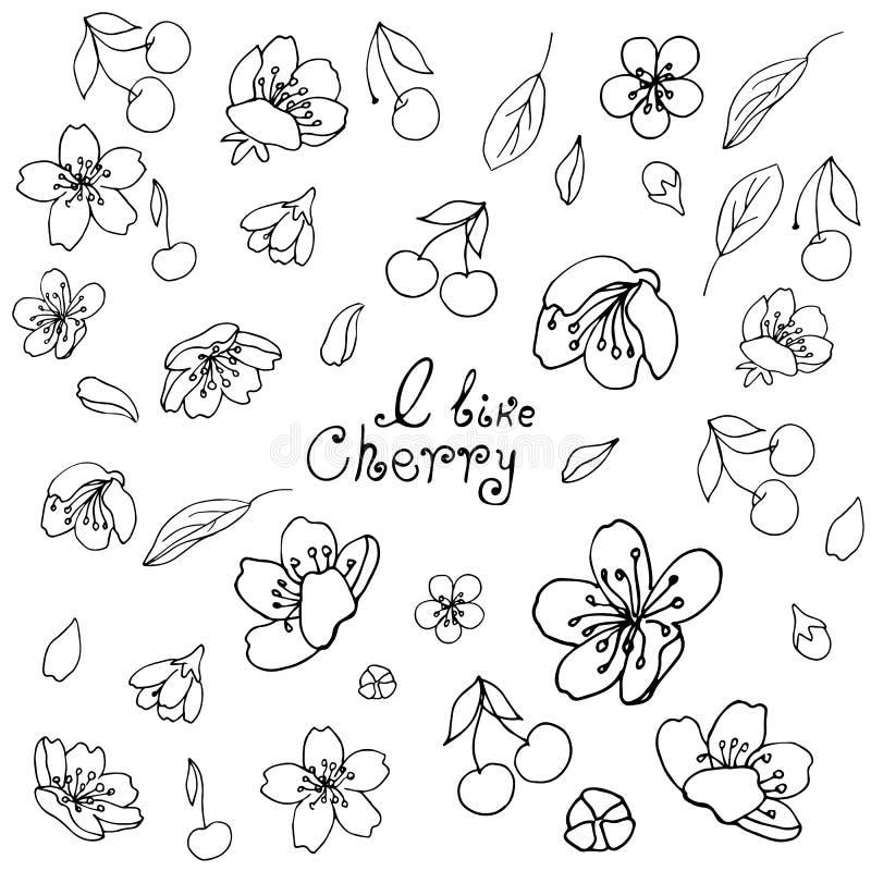 Un insieme degli oggetti Fiori, foglie e bacche della ciliegia Profilo nero su fondo trasparente illustrazione di stock