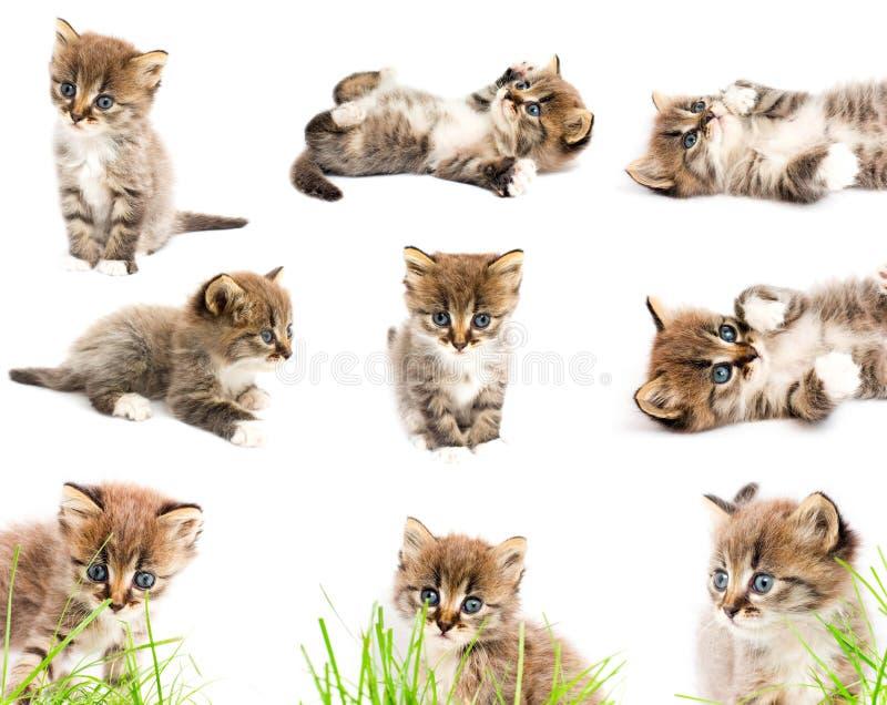 Un insieme dei gatti divertenti fotografia stock libera da diritti
