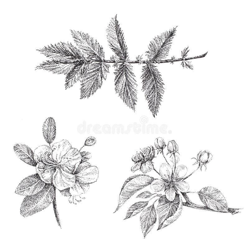 Un insieme del ramo del fiore della mela dei grafici illustrazione di stock