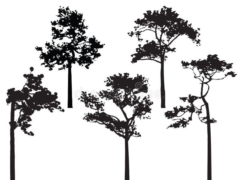 Un insieme del vettore della siluetta di cinque pini illustrazione vettoriale