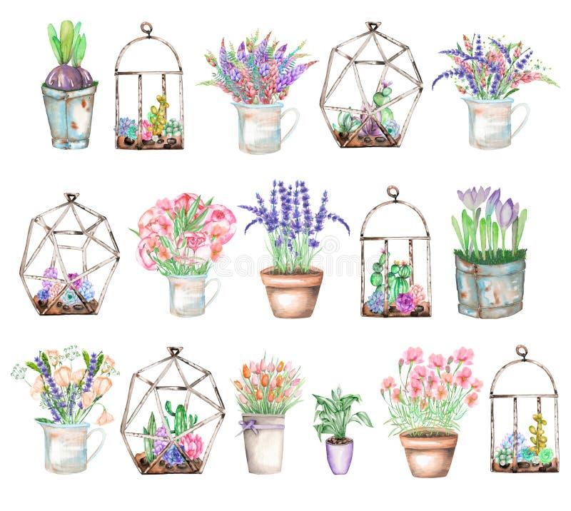 Un insieme delle illustrazioni con i mazzi dell'acquerello dei wildflowers in barattolo rustico e vasi e dei florariums con i suc illustrazione vettoriale