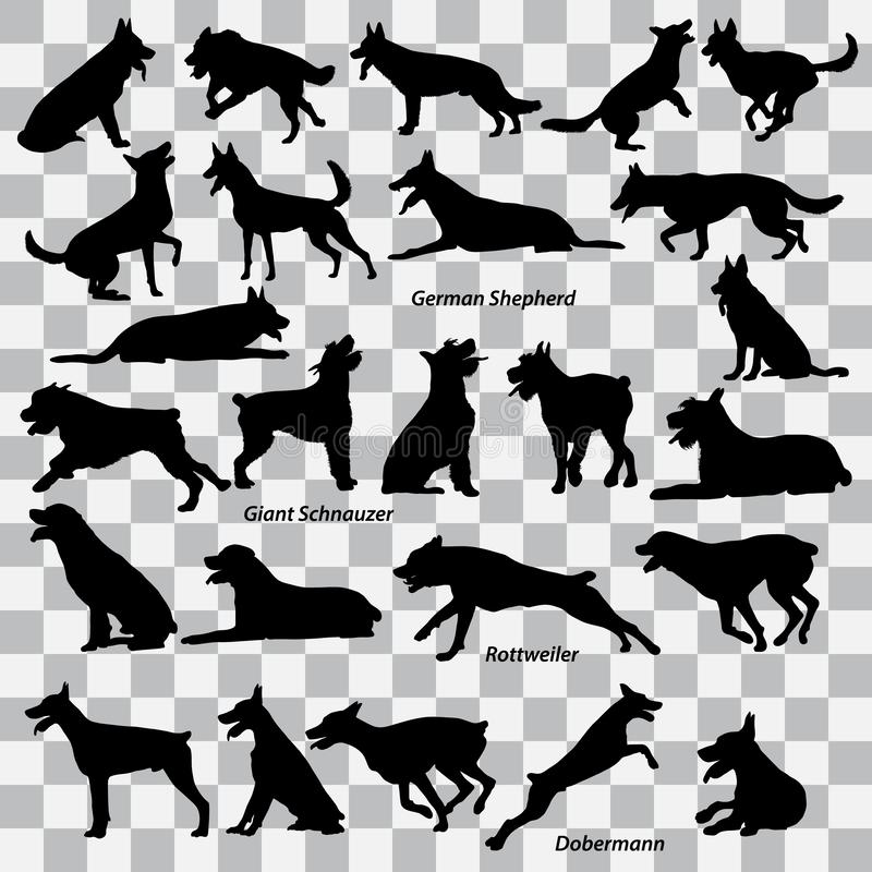 Un insieme delle siluette nere dei cani su un fondo trasparente Insieme delle illustrazioni di vettore illustrazione di stock