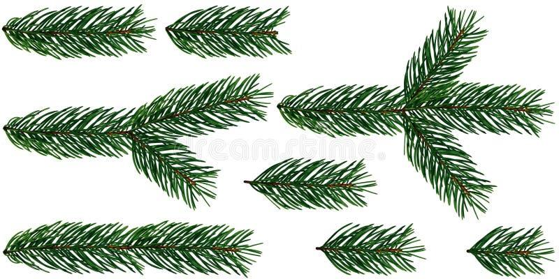 Un insieme di 8 elementi dell'albero di Natale dei rami di albero dell'abete è isolato su un bianco ed il fondo trasparente aggiu fotografia stock