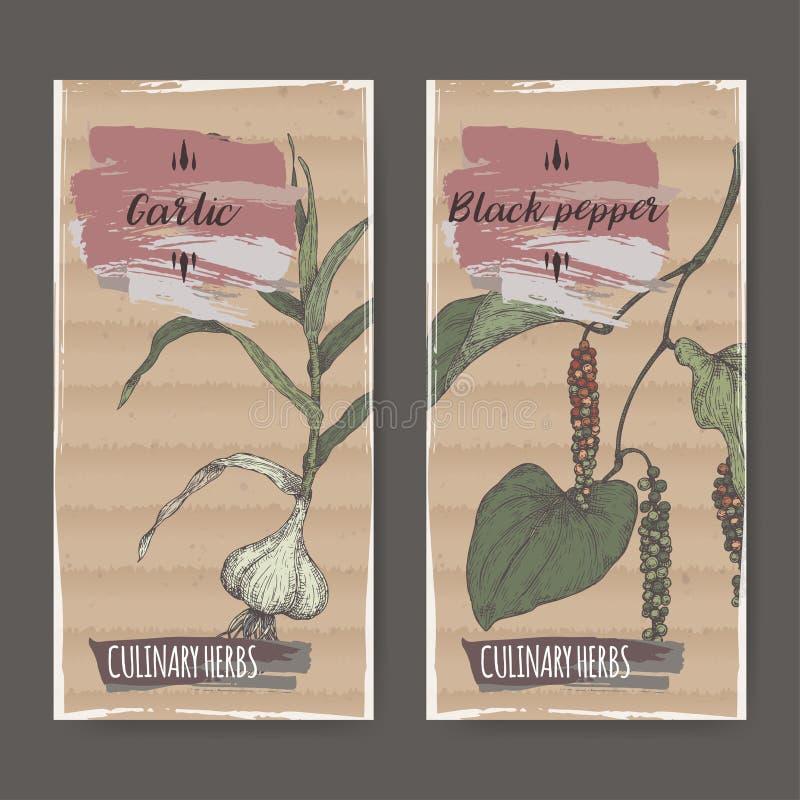 Un insieme di 2 etichette con lo schizzo disegnato a mano di colore del pepe nero e dell'aglio illustrazione di stock