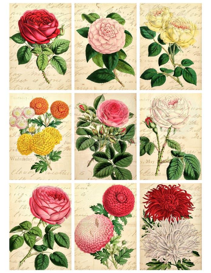 Un insieme di nove schede floreali dell'annata misera illustrazione vettoriale