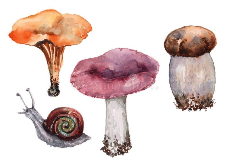 Un insieme di quattro oggetti separati Lumaca dell'uva e tre funghi, russula porpora, galletto arancio, boletus illustrazione vettoriale