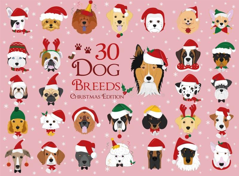Un insieme di 30 razze del cane con il Natale ed i temi di inverno illustrazione vettoriale