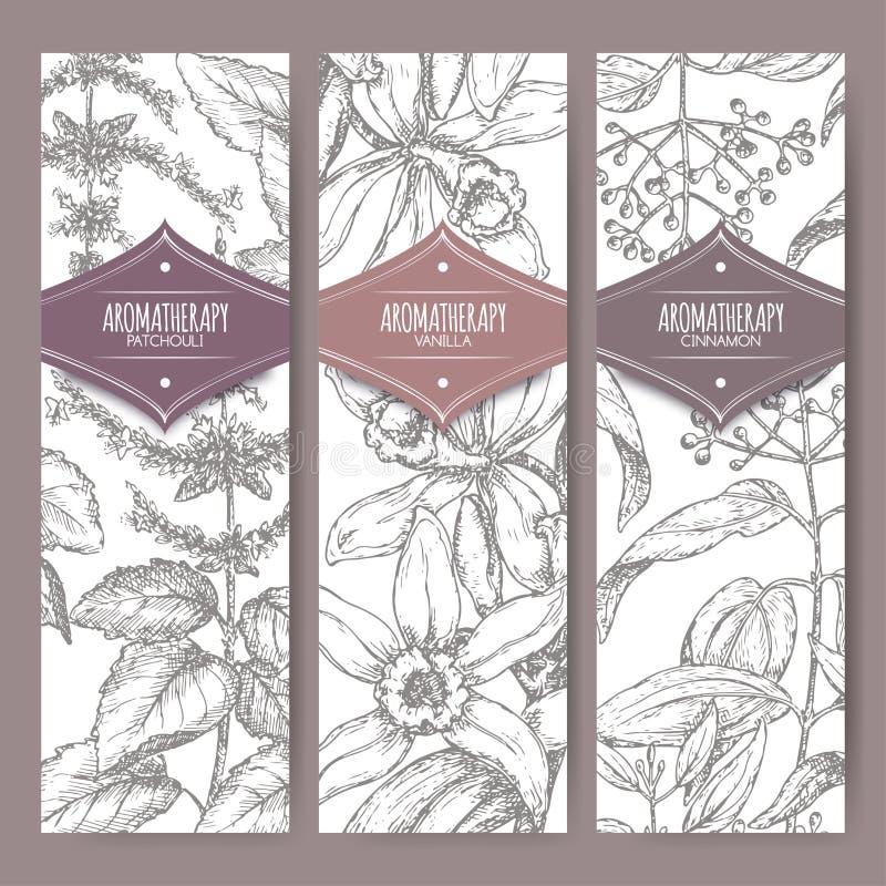 Un insieme di tre etichette con il pachouli, la vaniglia e la cannella royalty illustrazione gratis