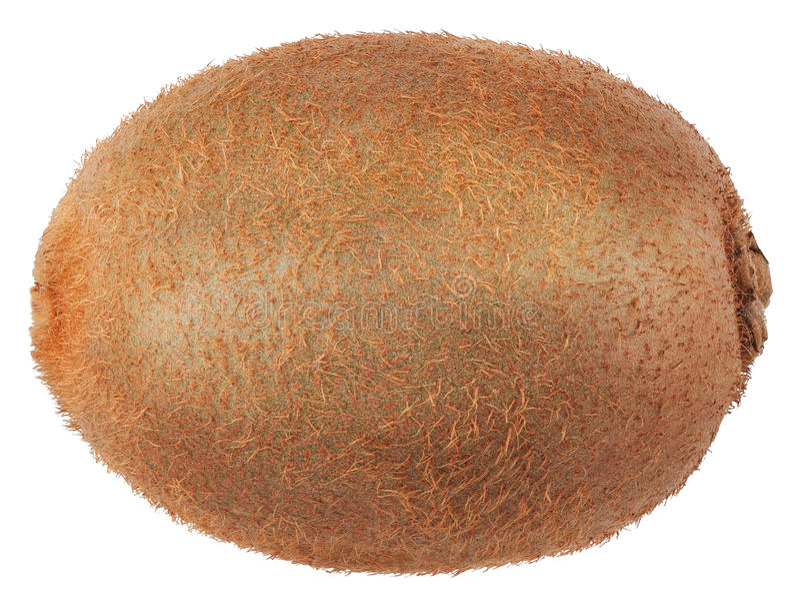 Un intero kiwi isolato su bianco immagine stock