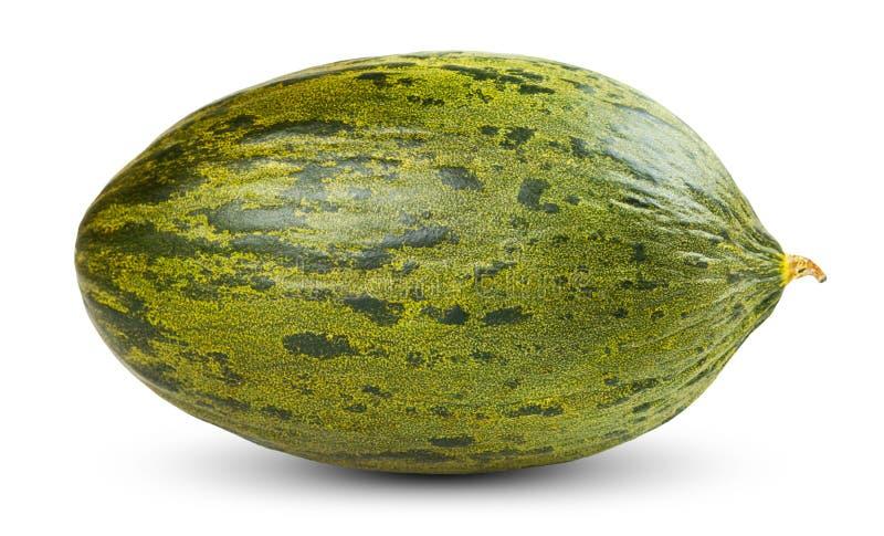 Un intero melone fresco di Piel de sapo su bianco fotografia stock libera da diritti