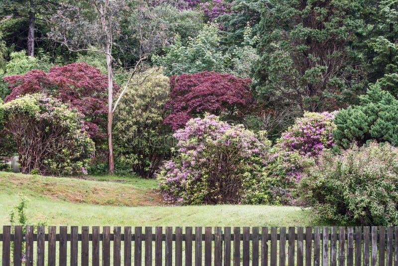 Un jardín en montañas escocesas fotos de archivo