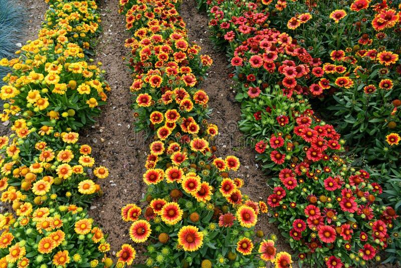 Un jardín por completo de las flores para las abejas, las mariposas y otros insectos imagen de archivo