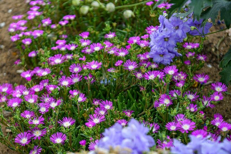 Un jardín por completo de las flores para las abejas, las mariposas y otros insectos fotografía de archivo