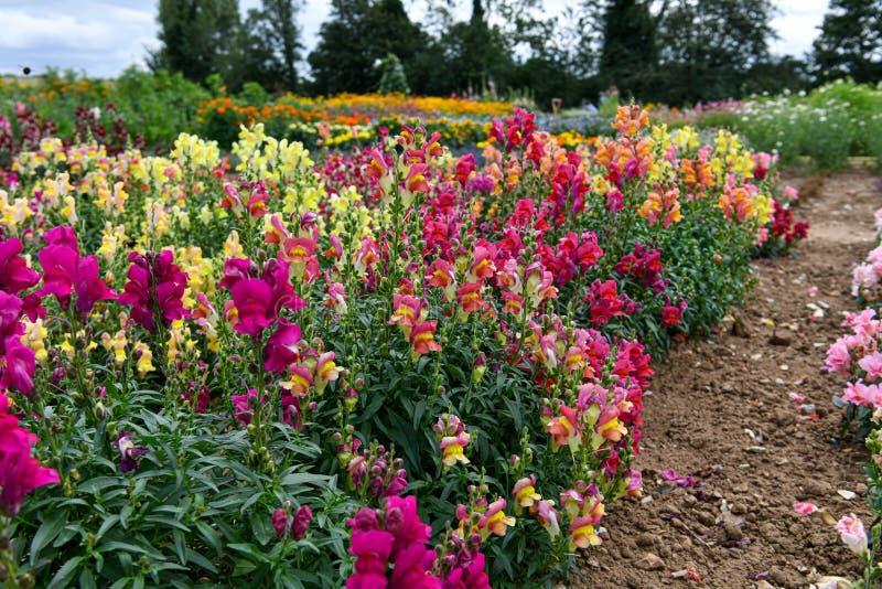 Un jardín por completo de las flores para las abejas, las mariposas y otros insectos imagen de archivo libre de regalías