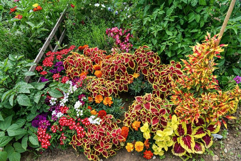 Un jardín por completo de las flores para las abejas, las mariposas y otros insectos fotos de archivo