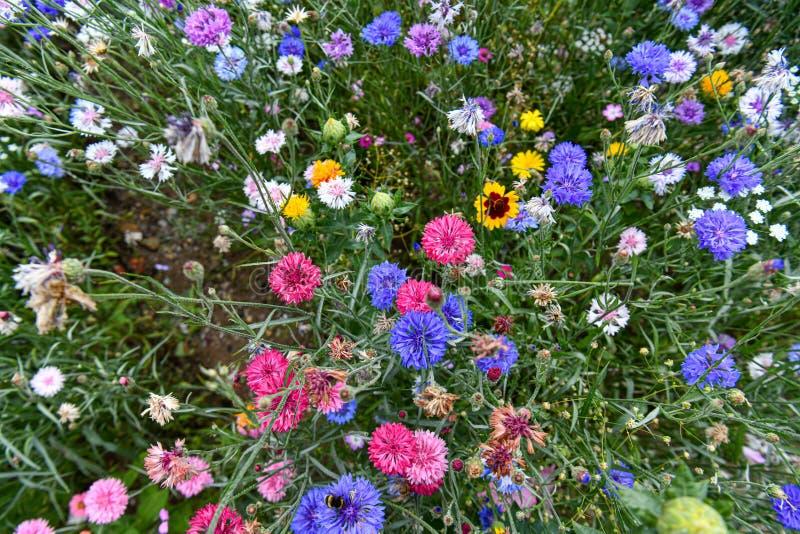 Un jardín por completo de las flores para las abejas, las mariposas y otros insectos fotografía de archivo libre de regalías