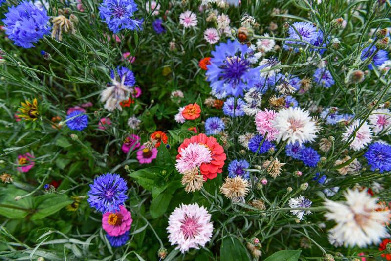 Un jardín por completo de las flores para las abejas, las mariposas y otros insectos foto de archivo