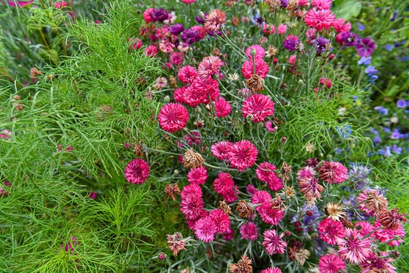 Un jardín por completo de las flores para las abejas, las mariposas y otros insectos imágenes de archivo libres de regalías