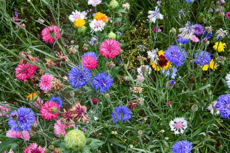 Un jardín por completo de las flores para las abejas, las mariposas y otros insectos imagenes de archivo