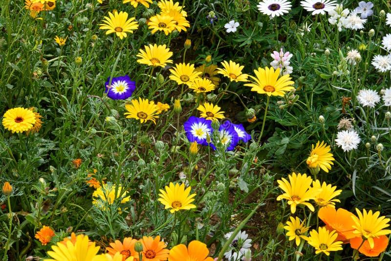 Un jardín por completo de las flores para las abejas, las mariposas y otros insectos fotos de archivo libres de regalías
