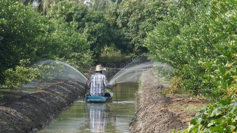 Un jardinier arrosait ses plantes vertes utilisant le bateau avec la pompe photos libres de droits
