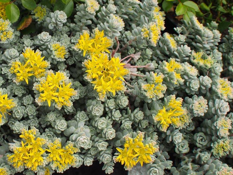 Un jaune fleurit photographie stock
