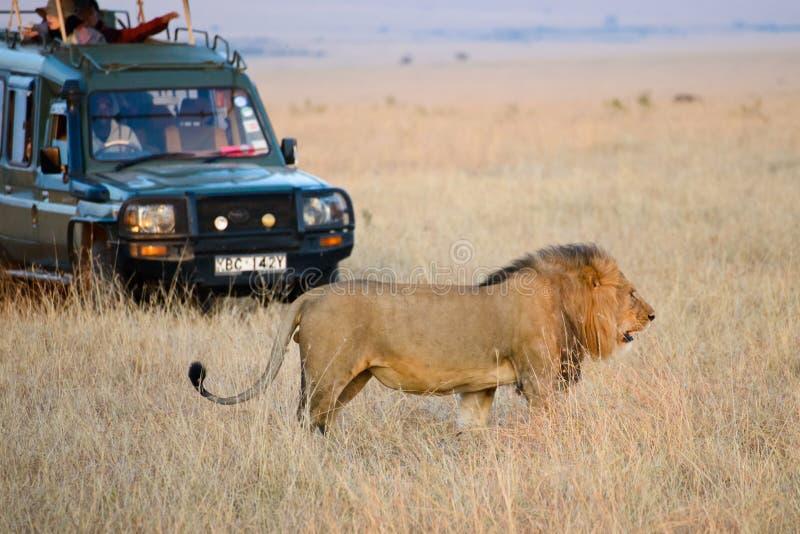 Un jeep de color verde oscuro del safari fotografía de archivo libre de regalías