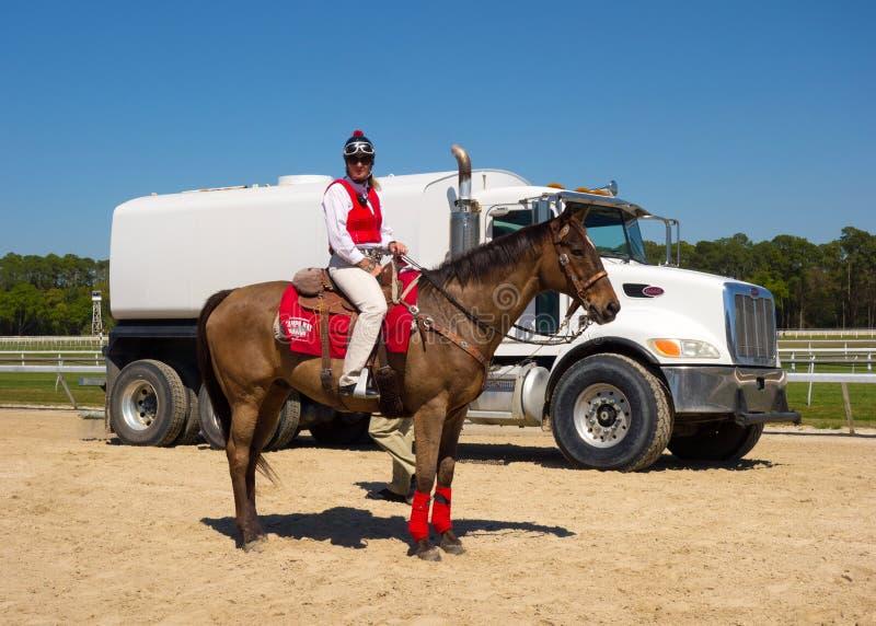 Un jeune cheval après une course à Tampa image libre de droits