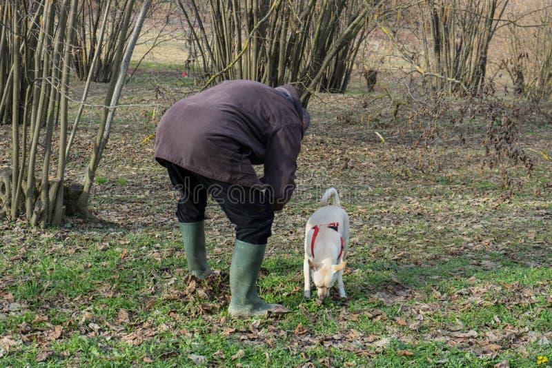 Un jeune chien de truffe dans un verger noisette du Langhe, Piedmony - I images libres de droits