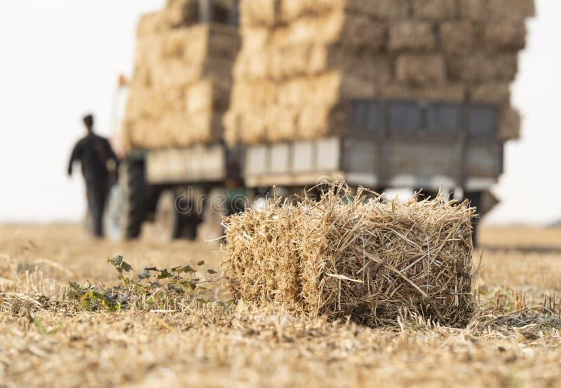 Un jeune exploitant agricole charge la paille de balles photographie stock libre de droits