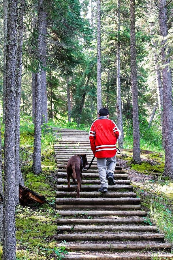 Un jeune garçon wakking vers le haut des étapes avec son chien image stock