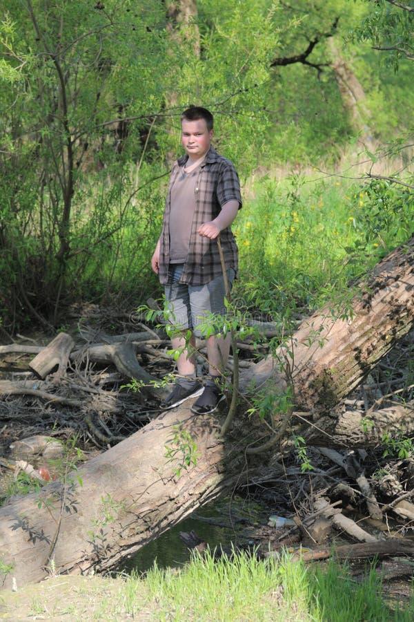 Un jeune homme dodu se tient sur le tronc d'un arbre d?labr? Pr?s du coupe-vent : photos stock