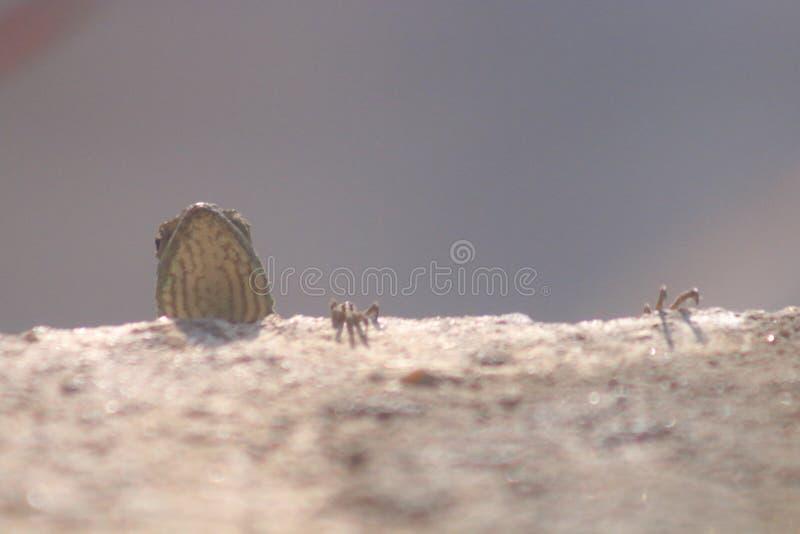 Un jeune lézard femelle image stock