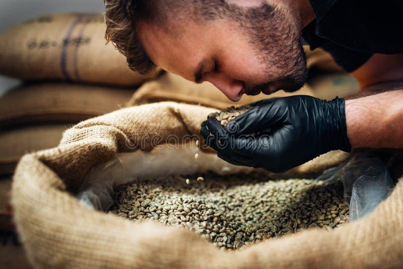 Un jeune ouvrier reniflant une poignée de haricots crus frais dans un sac de burlap à l'entrepôt de caféiers-rôtisseurs, gros pla photos stock