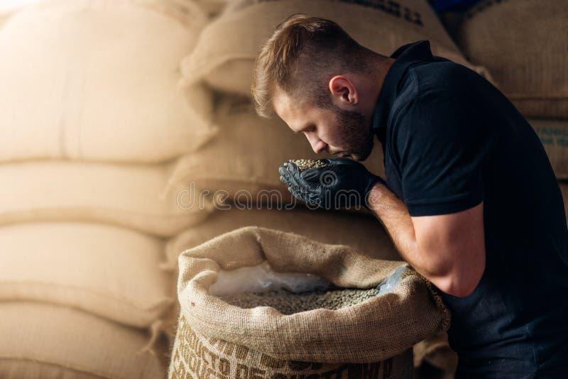 Un jeune ouvrier renifle une poignée de haricots crus fraîchement sortis du sac de burlap à l'entrepôt du grille-café image libre de droits