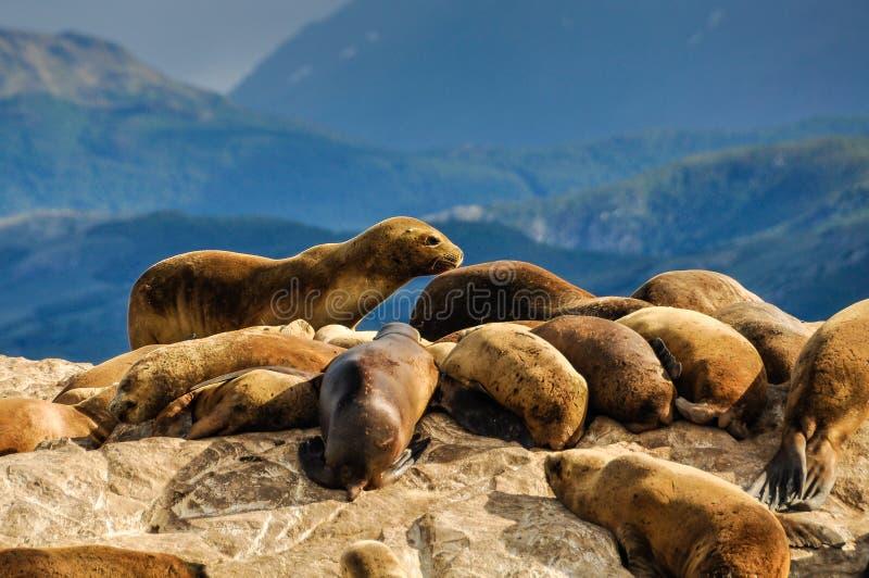 Un joint debout, la Manche de briquet, Ushuaia, Argentine photos libres de droits