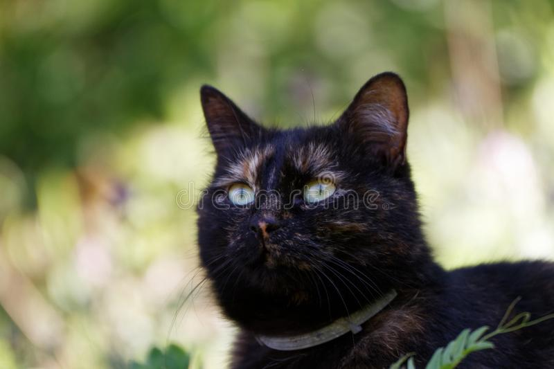 Un joli chat regardant un oiseau photo stock