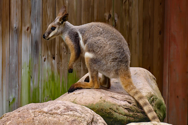Un jour au zoo images stock