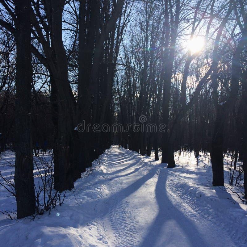 Un jour d'hiver image libre de droits