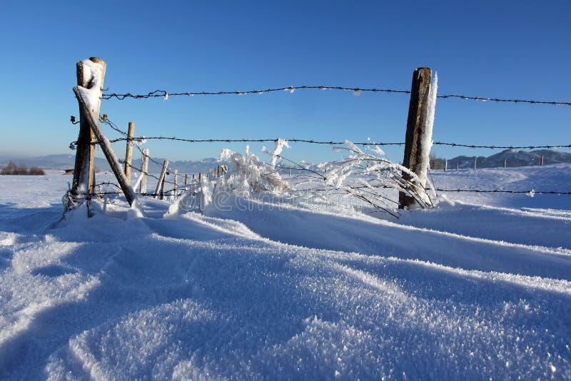 Un jour froid du ` s d'hiver avec les usines congelées avec la gelée sous une barrière photos stock