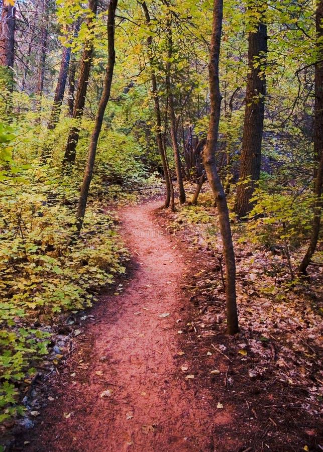 Un journal dans des couleurs d'automne photos stock