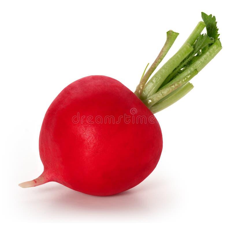 Un l?gume ? racine de radis rouge photos libres de droits