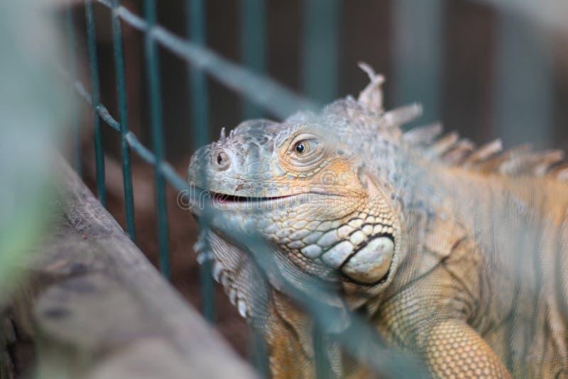 Un lagarto con una sonrisa imagen de archivo