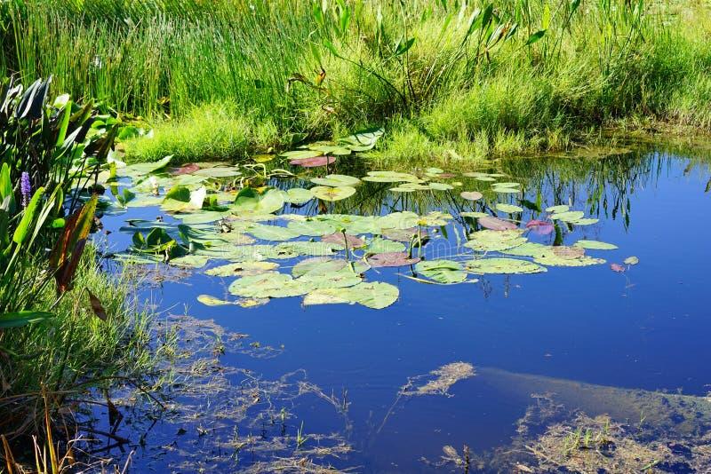 Un lago blu fotografie stock
