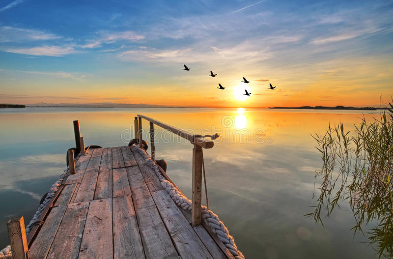 Un lago con gli uccelli fotografie stock
