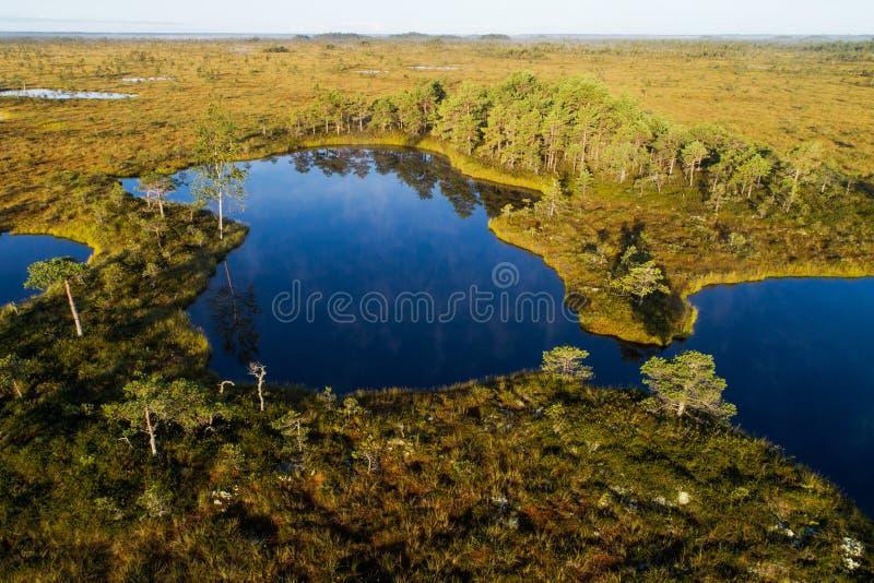 Un lago del pantano en el pantano de Valgeraba en Estonia imágenes de archivo libres de regalías