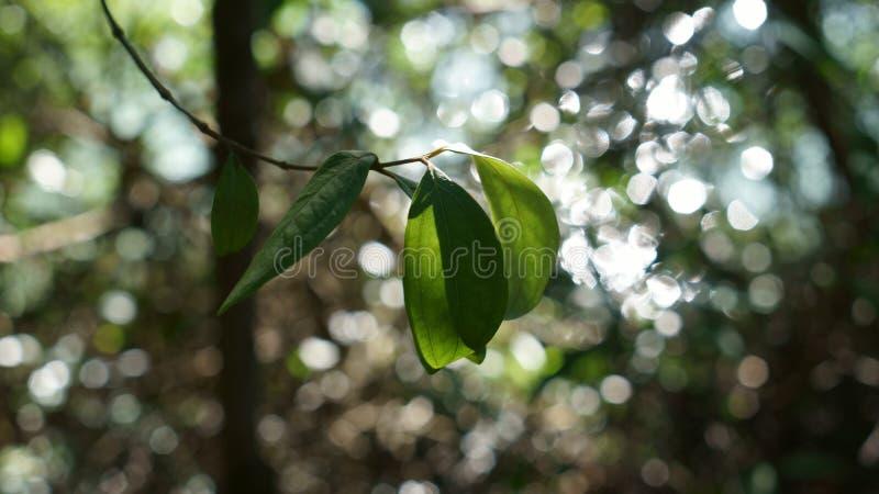 Un lago di shinny dietro le foglie immagine stock libera da diritti