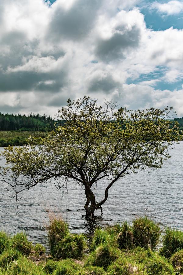Un lago en el parque nacional de Dartmoor fotos de archivo