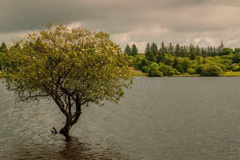 Un lago en el parque nacional de Dartmoor fotos de archivo libres de regalías